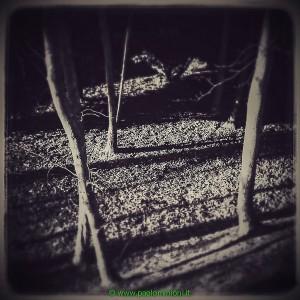 alberi_-2